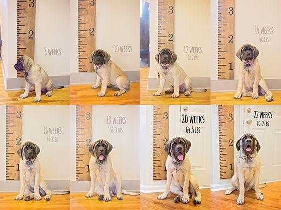 Puppy growth